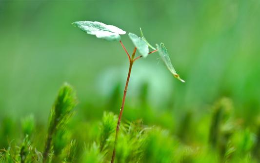 深圳節能環保網站建設,深圳節能環保網站設計方案